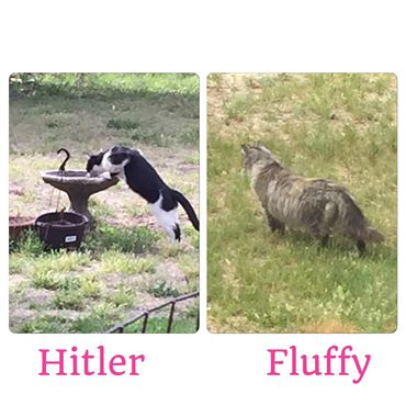 fluffy-and-hitler-5-20-15